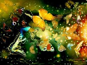 butterflies2-300x225