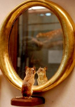 mouseinthemirror