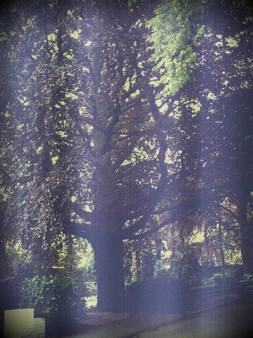 oudeboom1